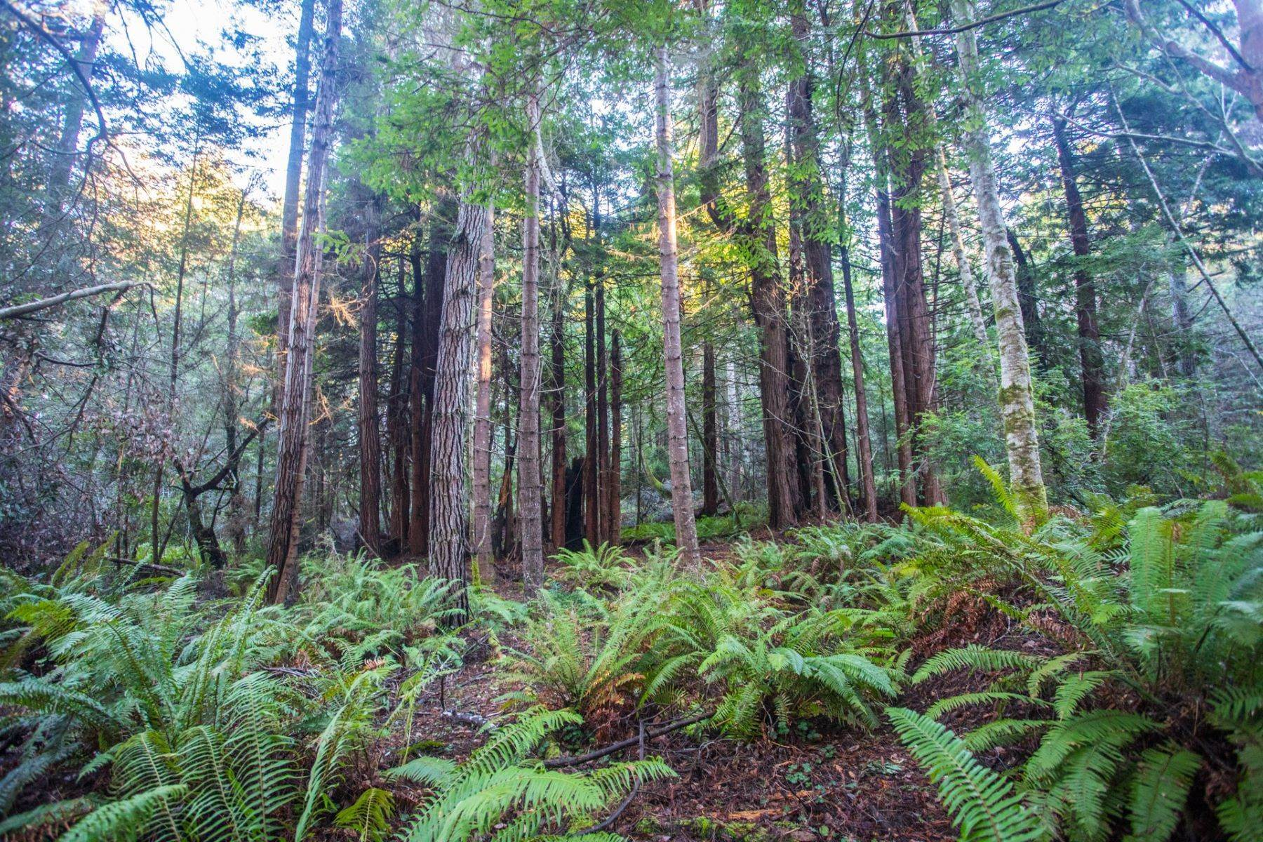 Land for Sale at Inglenook Oasis 26573 N Highway 1 Fort Bragg, California 95437 United States
